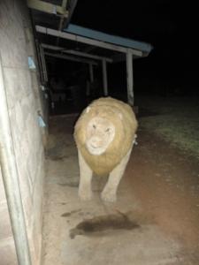 Africa 2013 069