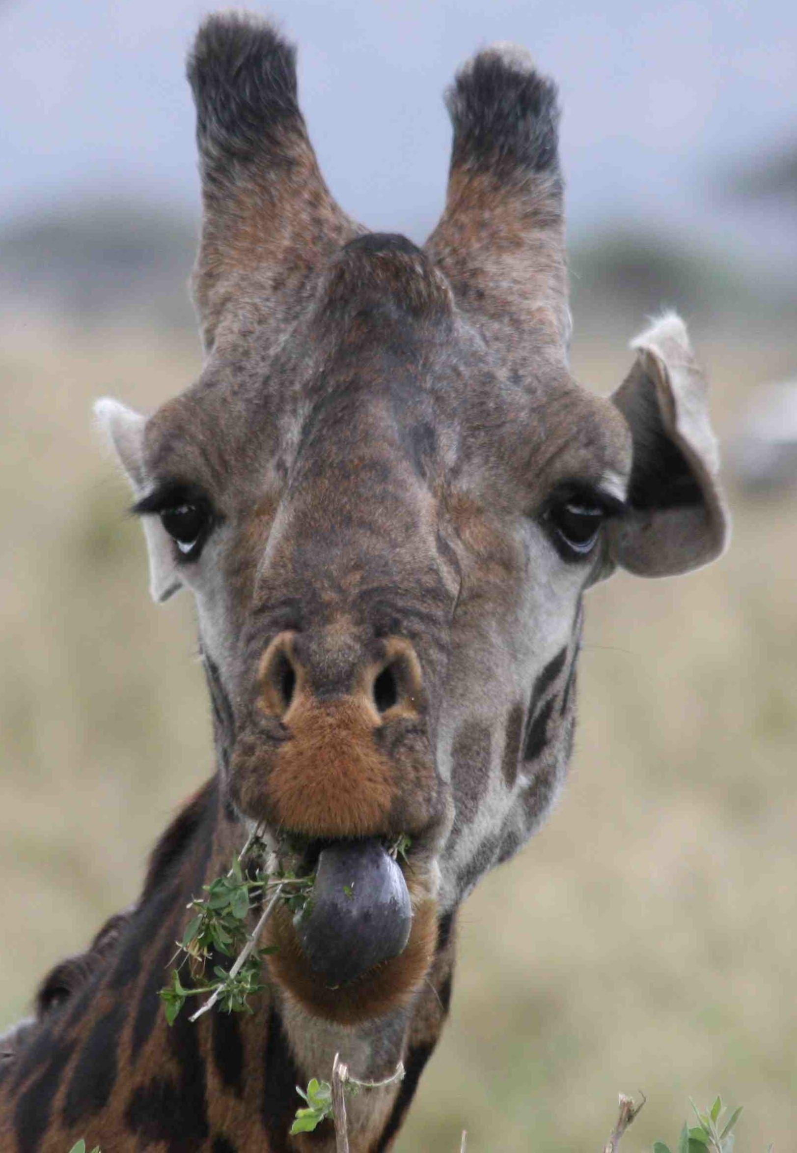 March 2013 Snapshot Serengeti
