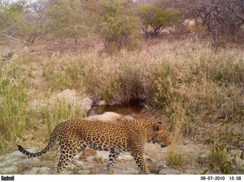 15:58 - Leopard