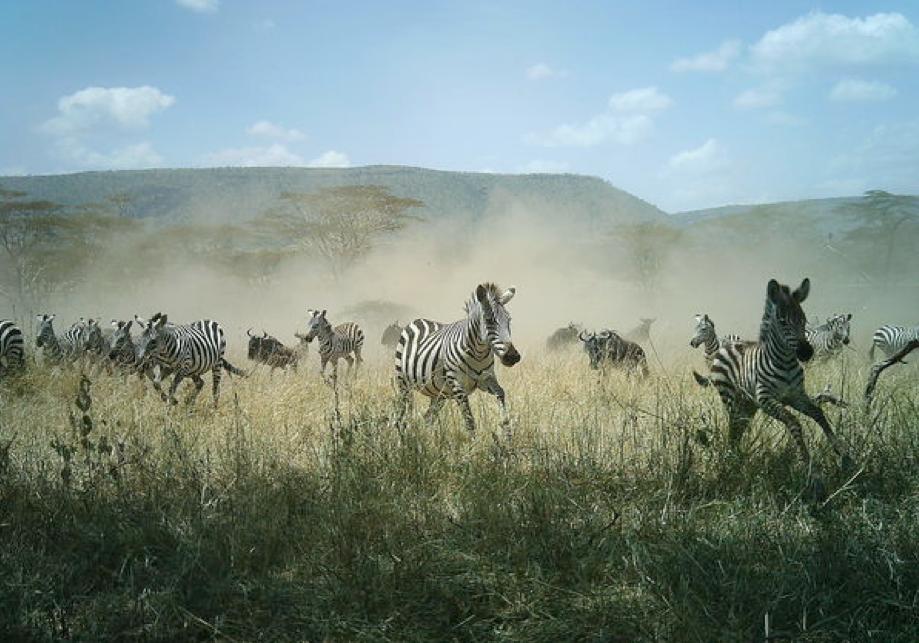 In search of | Snapshot Serengeti