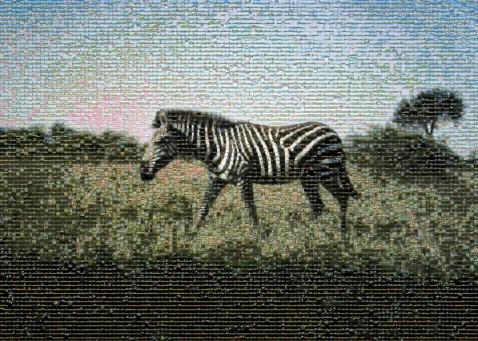 Meta Zebra Mosaic