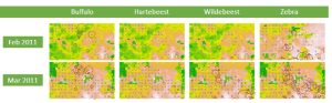 Herbivore distributions overlaid on NDVI readings