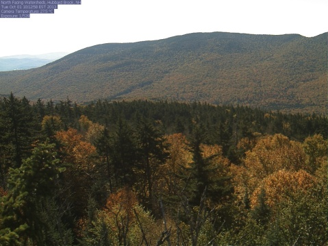 Phenology image looking out over woodland in New Hampshire
